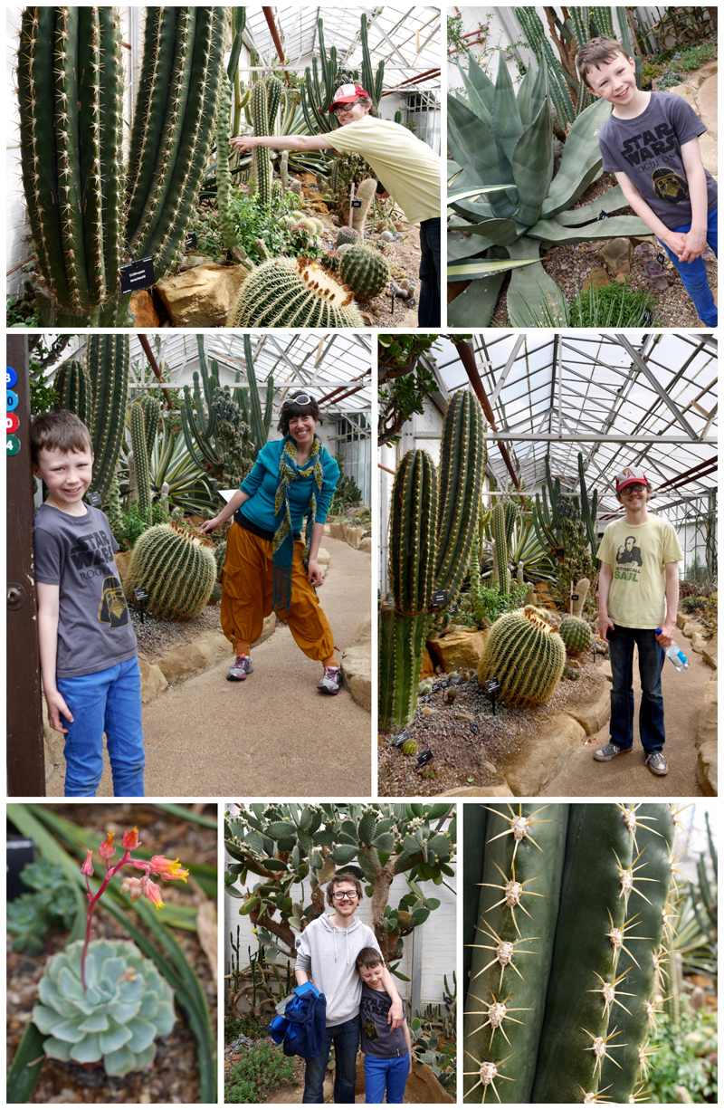 cactus house collage