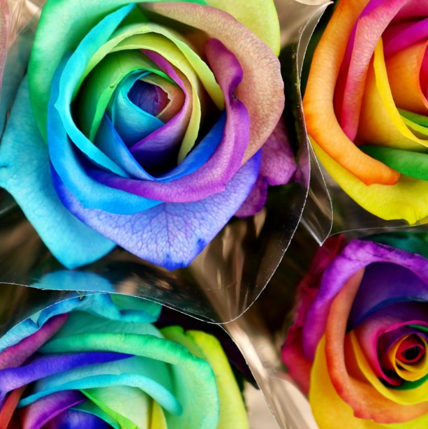 insta rainbow roses norwich market